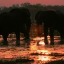 Elephants at Moremi Under Canvas