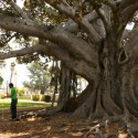 waldmanswingtree